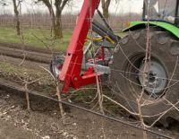 В саду производится подрезка корней яблони ...