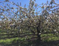 "Gardens flowering at ""Plodovoe"" LLC"